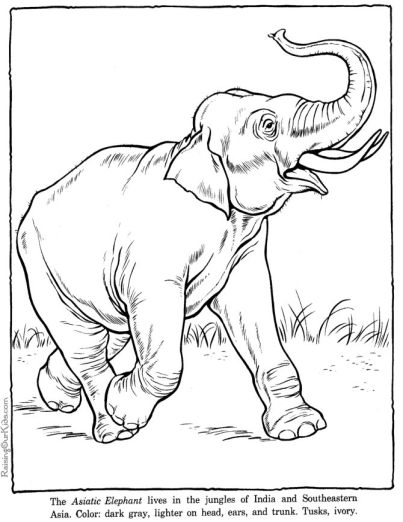 printable zoo animals coloring page elephant